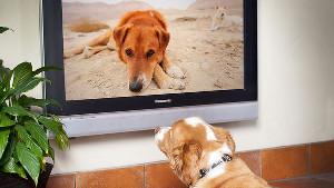 犬のためのTVチャンネル「DOGTV」ドッグティービー