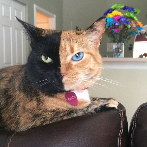 猫好きならフォローしてる?ネコおすすめインスタグラム Cats Instagram Accounts to Follow