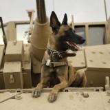 元軍用犬と少年の絆を描く感動映画「MAX」マックス 予告編が公開