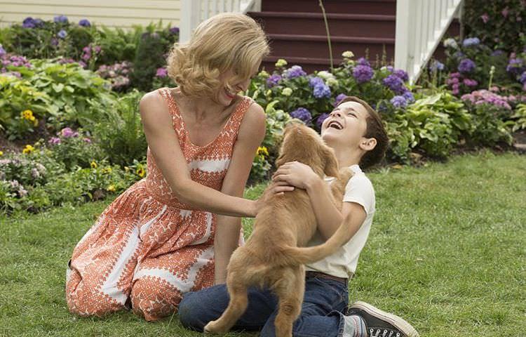犬好き必見感動映画 A Dog's Purpose 野良犬トビーの愛すべき転生